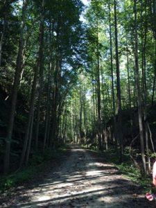 ohiopyle-woods