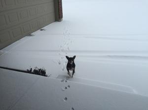 Boomer snow